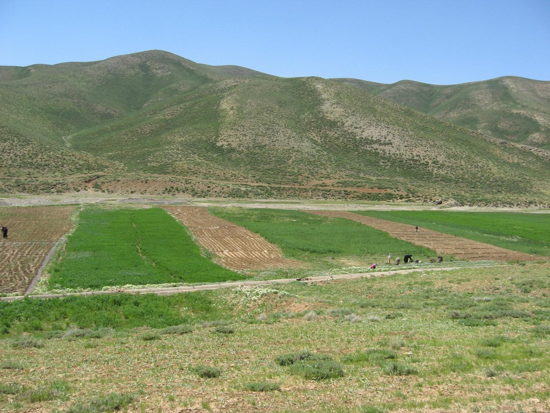 مطالعات مرحله اول شبکه آبیاری و زهکشی اراضی سد میدانک و دره سیب